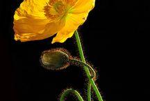 Bloemen om te schenken