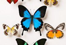 Mariposas y naturaleza