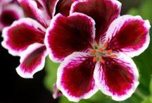 Flowers I Have Loved / by Karen Miller