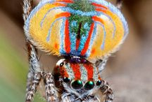 Spidey Spiders