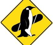 bacheca Piterest di prova / Freestyle Association Snowboard agonistico ragazzi bambini