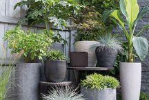 화분 식물