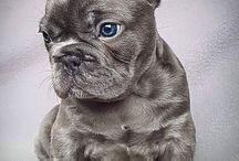 Dogs Love ♥️