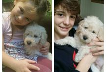 Our labradoodle Henry!! eekk