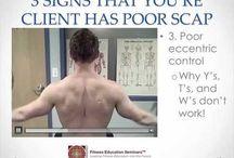 Fysioterapeut / Skapulastabiliaation