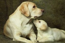 pups / by Debbie VanWyck