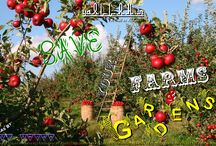 Farming, Agriculture, Gardens in Islam and Their Safety / Farming, Agriculture,Gardens,Kitchen Garden,Vegetables,Fruits,Islamic Farms,Quran Verse About Greenery
