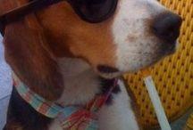 doggie / Hondjes!!!!!