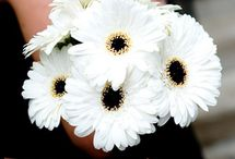 Flowers / by Sara Sherry