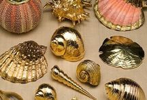 midye calismalari