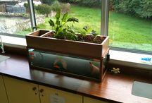 aqua and gardening