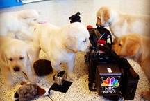 Animals / Animal news from NBC News.