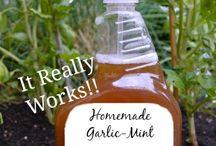 Garlic & Mint remedy