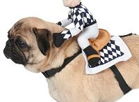 Halloween / Spooky and cute costumes for your pet!