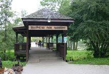 białowieża      białwieski park narodowy / białowieża