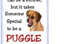 Puggles / by Brenda Budlove