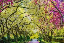 bazı yerler çok güzel / Manzara resimleri - En güzel doğa resimleri