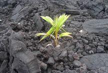 Conseils phyto-aromatiques / Des conseils pratiques sur l'utilisation des plantes médicinales et huiles essentielles