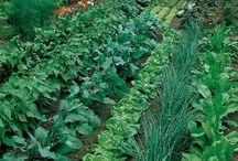 Make my garden grow / by Angie VanLeeuwen