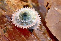 Spirals, Fractals everything Fibonacci