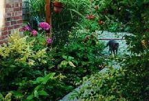 shade garden / by Erin Ford
