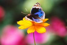 Butterflies Are Free (With a few moths thrown in) / by Jeri Lynn