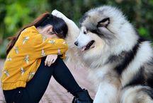 amor de dono para sei animal