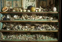 Shells in our collections / Not just found on the sea shore, discover the curious collections of shells in our care... / by National Trust