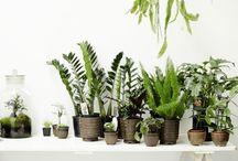 Precious Greens / Flowers, plants and potts