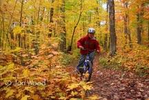 Otoño & Bicicletas by Moma Bikes / Foto galería de bicicletas y el otoño de la mano de Moma bikes / by Bicicletas Moma bikes