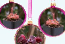Plant Collections & Gift Kits for Christmas / Venus Flytraps & Carnivorous Plants for Christmas We just added a bunch of new Venus Flytraps for Christmas and put together gift kits that include Sundews, Pitcher Plants and other Carnivorous Plants. Alive & Growing Delivered to your home with a heater pack.