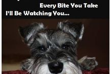 All things Schnauzer / by Mary Weise