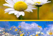Jardim e Flores - Garden and Flowers / Tapete flores aeroporto Dubai Emirados Árabes e se estende pelas avenidas O tapete de flores começa no aeroporto  de Dubai, Emirados Árabes e se estende pelas avenidas, Tudo com irrigação.Nada melhor para começar a semana com uma imagem lida dessas   http://www.ovaledoribeira.com.br/2011/11/tapete-flores-aeroporto-dubai-emirados.html / by Camilo Aparecido