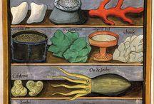 Botanical & zoological illustrations