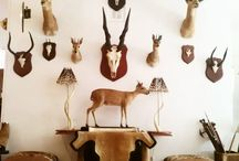 Taxidermy Trophy Rooms / Showrooms