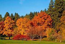 Drzewa jesienne / Zdjęcia drzew w jesiennej szacie