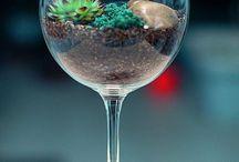 natura w szklance /  las w kubku