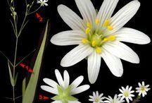 цветы. строение