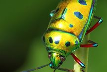Inspiring Bugs / One of the best sources of inspiration for design art.