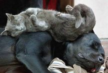 сплю, где хочу / про спящих и ленивых котиков