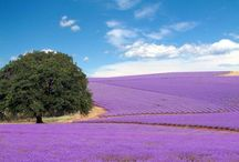 color lavanda / by paolettaroom