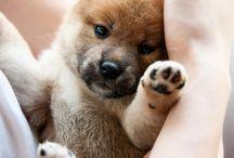 puppy love / by Sandy Hunter