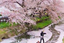 Japanese sights