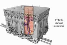 Κλινική μαλλιών Bergmann Kord   Μεταμόσχευση μαλλιών   Πληροφορίες