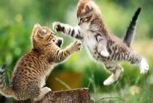 Cats / Quando prendi un gatto, non sei tu che lo adotti, ma lui che ti permette di adottarlo!