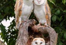 Owls / Just beautiful birds