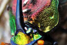 couleurs et vie