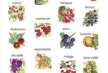 gyümölcsök, zöldségek
