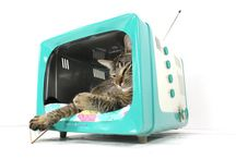 amazing vintage tv is cat bed or fish tank