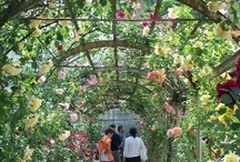 Pavia Botanical Garden